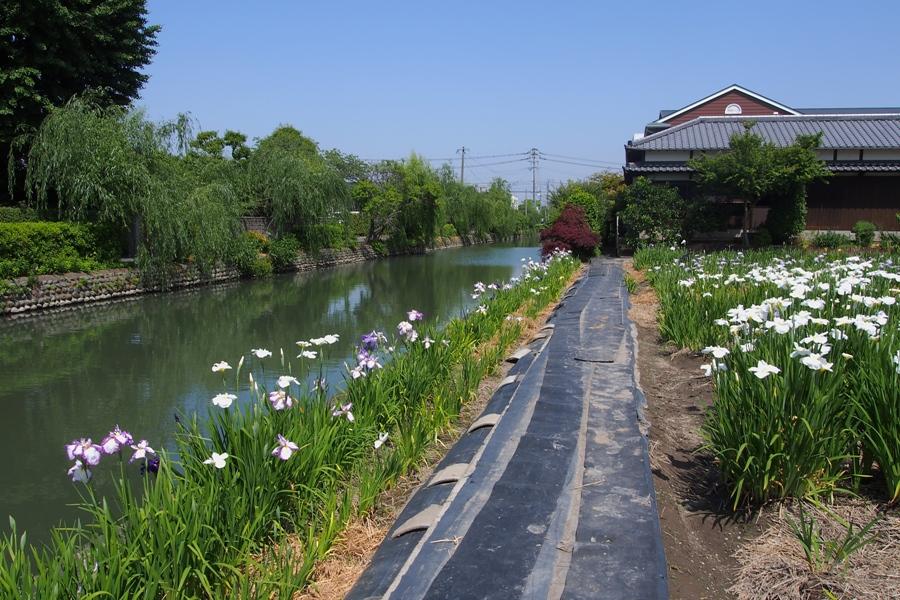 椛島菖蒲園