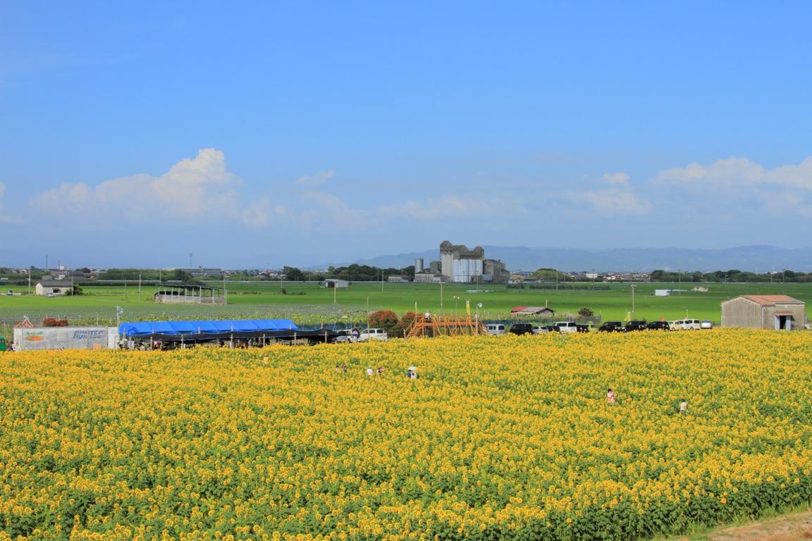 ひまわり園2014